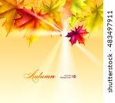 autumn leaves of maple. vector... | Shutterstock .eps vector #483497911