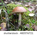 edible mushroom. brown cap... | Shutterstock . vector #483576721