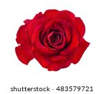 rose isolated on the white... | Shutterstock . vector #483579721