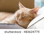 Ginger Cat Sleeping In...