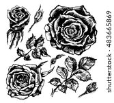 Hand Drawn Roses  Rosebuds And...