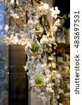 miniature plant in glass vase | Shutterstock . vector #483697531