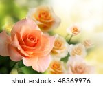 Stock photo blossom pink roses 48369976