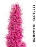 bright flower spiraea ... | Shutterstock . vector #483757111