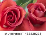 rose petals close up   Shutterstock . vector #483828235