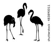 Flamingo Isolated. Exotic Bird...