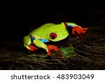 Small photo of red eyed tree frog .Agalychnis callidrias a tropical amphibian from the rain forest of Costa Rica and Panama. Beautiful jungle animal.