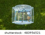 budgerigar on the cage. budgie... | Shutterstock . vector #483956521