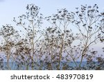 Dry Plants On The Background O...