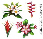 flower exotic islands set ... | Shutterstock . vector #484153789