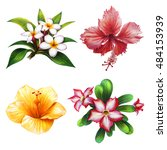 Stock photo beautiful flowers for spa set frangipangi red and yellow hibiscus kalachuchi 484153939
