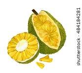 jackfruit  vector illustration. ... | Shutterstock .eps vector #484184281