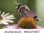 Insects Pollinating An...