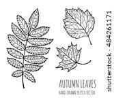 Autumn Leaves  Chestnut  Oak ...