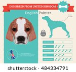 English Pointer Dog Breed...