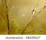 Cobweb Surrounded By The...