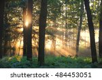 misty sunrise in the forrest | Shutterstock . vector #484453051
