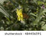 butterfly and yellow poppy...   Shutterstock . vector #484456591
