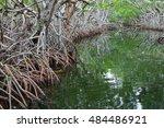 mangroves in the florida... | Shutterstock . vector #484486921