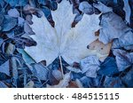 Fallen Leaves With Blue Frost