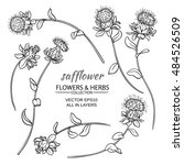 Safflower Plant Vector Set On...
