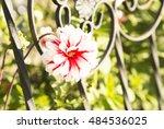 Fresh Flower  Red White Flower...