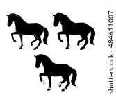 black silhouette of horse on a... | Shutterstock .eps vector #484611007