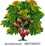 vector abstrak  cocoa tree | Shutterstock .eps vector #484700047