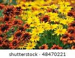 Fall Color  Rudbeckia Flowers...