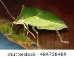 bugs are vibrant and diverse...   Shutterstock . vector #484738489