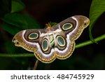 portrait of night tropical moth.... | Shutterstock . vector #484745929