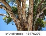 big australian gum tree blue... | Shutterstock . vector #48476203