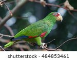 Small photo of White-fronted amazon (Amazona albifrons) sitting on a branch with vegetation in the background