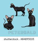 cat peterbald cartoon vector... | Shutterstock .eps vector #484895035