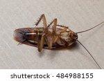 cockroache dead. | Shutterstock . vector #484988155