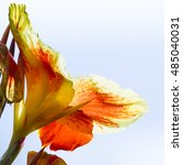 Orange Gladiolus Flower With A...
