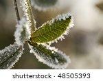 frozen green plant | Shutterstock . vector #48505393