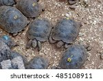 Baby Giant Tortoises At Charle...