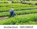 hoi an  vietnam   july 17  2015 ... | Shutterstock . vector #485138965
