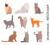 cat big set. beautiful cartoon... | Shutterstock . vector #485251669