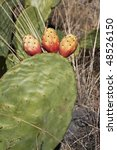 Three prickly pears. - stock photo
