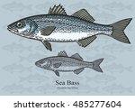 sea bass. vector illustration... | Shutterstock .eps vector #485277604