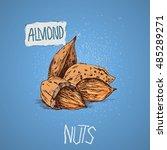 almond. vector illustration ... | Shutterstock .eps vector #485289271