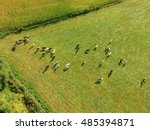 aerial view of cows on green...