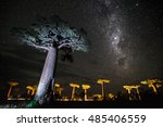 starry sky and baobab trees of... | Shutterstock . vector #485406559