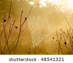 Spider Web On A Meadow In The...