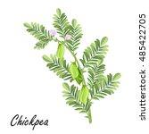chickpea   cicer arietinum ... | Shutterstock .eps vector #485422705