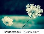 Flower Umbrella. Toned Photo....