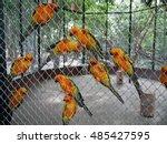 Sun Conure Parrots In A Cage.