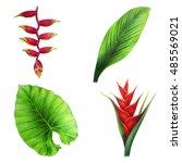 Leaf And Exotic Flower Set ...
